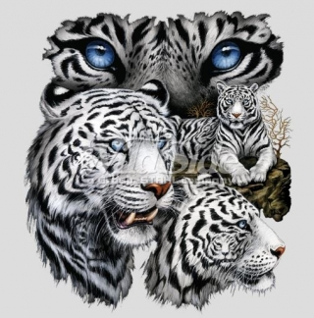 T-Shirt Weiße Tiger